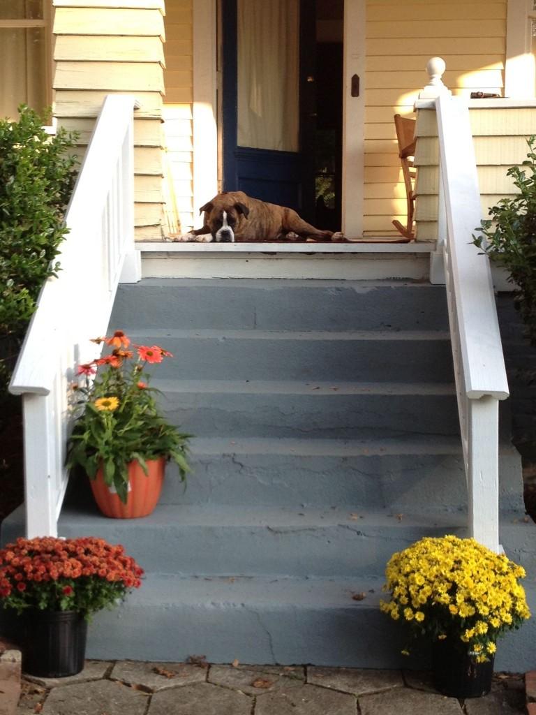 We also got a Porch Dog and named her Magnolia Blossom.